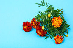 Garden flowers of orange color on bright pastel background Royalty Free Stock Photos