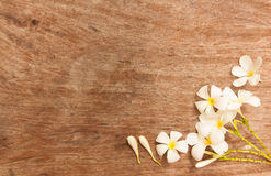 The garden flowers over the table that made from wood Royalty Free Stock Image