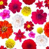 Garden flowers pattern seamless. Flower texture. marigold, Dahli Stock Photography