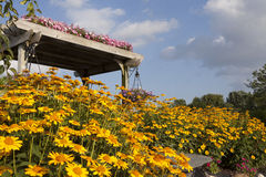 Garden Flowers and Pergola with bright blue sky and yellow daisies. Pergola in a water and flower garden at a garden center with bright yellow daises Stock Photo