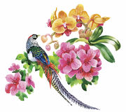 Garden flowers and pheasant birds watercolor pattern Stock Image