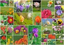 Garden flowers Royalty Free Stock Photos