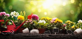 Garden Flowers and Plants on a Sunny Background. Gardening Concept stock image