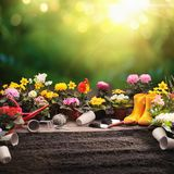 Garden Flowers and Plants on a Sunny Background. Gardening Concept stock photography