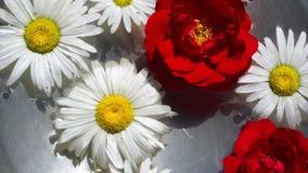 Garden flowers stock video