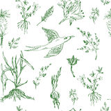 Garden flowers seamless pattern sketch Stock Photos