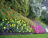 Garden flowers. stock image