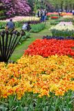 Garden flowers in spring-Keukenhof in Stock Photos