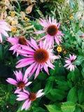 Garden flowers. Summer garden flowers Royalty Free Stock Images
