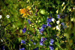 Garden flowers. Summer garden flowers, wild garden at home, caravan, holiday time, colors, background, meadow Royalty Free Stock Images