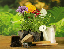 Garden flowers, tools (rake, shovel, watering can) Stock Images