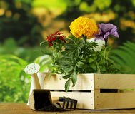 Garden flowers, tools (rake, shovel, watering can) Stock Photo