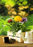 Garden flowers, tools (rake, shovel, watering can) Stock Photos
