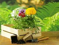 Garden flowers, tools (rake, shovel, watering can) Stock Image