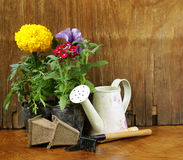 Garden flowers, tools (rake, shovel, watering can) Royalty Free Stock Photos