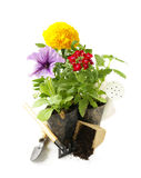 Garden flowers, tools (rake, shovel, watering can) Royalty Free Stock Images