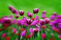 Garden of Flowers and Tulips Stock Photography
