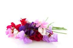 Garden flowers vetchling Stock Images