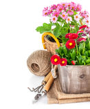 Garden flowers in wooden basket with garden tools Royalty Free Stock Images