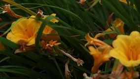 Garden flwers in the summer. Garden flwers and fauna in summertime stock footage