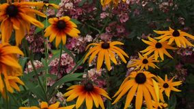Garden flwers in the summer. Garden flwers and fauna in summertime stock video footage