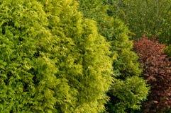 Garden foliage Royalty Free Stock Photos