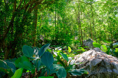 Garden forest holiday in hotel resort Thailand Royalty Free Stock Photos