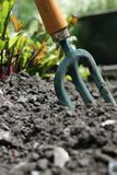 Garden Fork. A small hand held garden fork set in the earth, with beetroot growing in the background. Urban garden scene Stock Photos