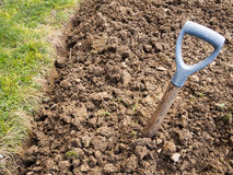 Garden fork snapped and buried! Poor soil reality. Stock Photography