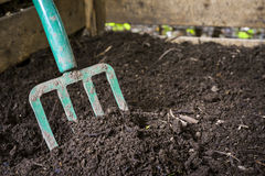 Garden fork turning compost. Garden fork turning black composted soil in wooden compost bin Stock Image