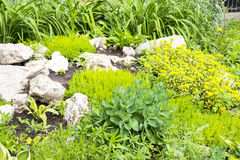 Garden fragment landscaping. Detail design of the garden with alpine slide Royalty Free Stock Photography