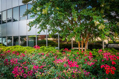 Garden at Freedom Park and modern building in Rosslyn, Arlington Royalty Free Stock Photography