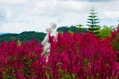 Garden of Fresh and Blooming Red Cockscomb Flowers With A White Stone Statue of A Beautiful Women stock image