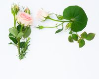 Garden fresh flowers stock photography