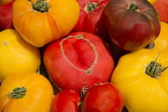 Garden fresh healthy nutritious organic heirloom tomatoes Stock Images