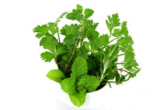 Garden Fresh Herbs Stock Photo