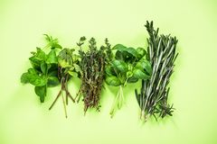 Garden fresh herbs collection. On plain background above aroma aromatic basil bunch food green healthy ingredient leaf medicine minimal mint natural organic royalty free stock photos