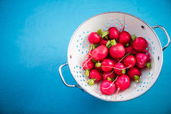 Garden fresh radish in metal colander, overhead. On wooden vibrant blue board Stock Photos