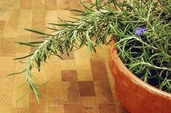 Garden Fresh Rosemary Stock Image