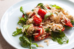 Garden fresh tomato and orzo salad. A freshly tossed garden salad including arugula, tomato, orzo, feta, and lemon zest sits on a blue plate Royalty Free Stock Image