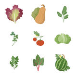 Garden fresh vegetables Stock Image