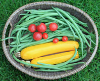 Garden Fresh Zucchini, Green Beans, and Tomatoes Royalty Free Stock Photography