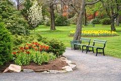 Garden Fritillaria Stock Images