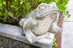 Garden Frog Royalty Free Stock Image
