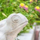 Garden Frog Stock Photo