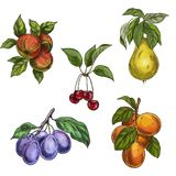 Garden fruits with leaves and branches. Cherry, apples, pear, plums, apricots. Royalty Free Stock Photos