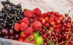 Garden fruits of the season Stock Photography