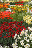 Garden full of colorful flowers, tulips and hyacinths. Vertical Royalty Free Stock Photos