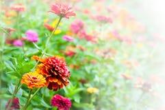 Garden full of flowers Stock Photos