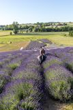 A `Garden full of lavender` arranged by Barbara and Andrzej Olender in Ostrów 40 km from Krakow. The smell and color of lavende. Ostrow, Poland - June 6, 2018 royalty free stock images